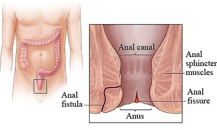 Anal Canal Image
