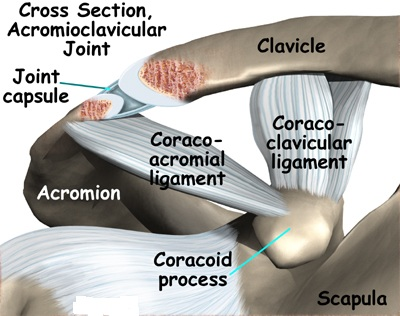 Acromioclavicular joint Picture