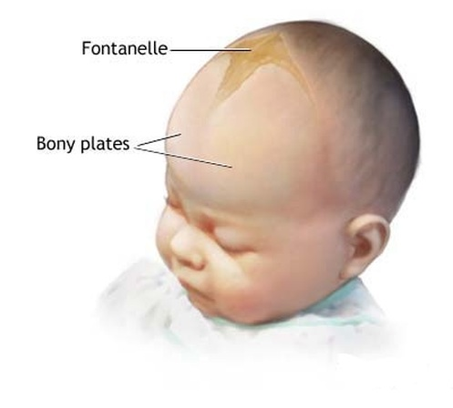 anterior fontanelle - location, size, closure, functions and, Cephalic Vein